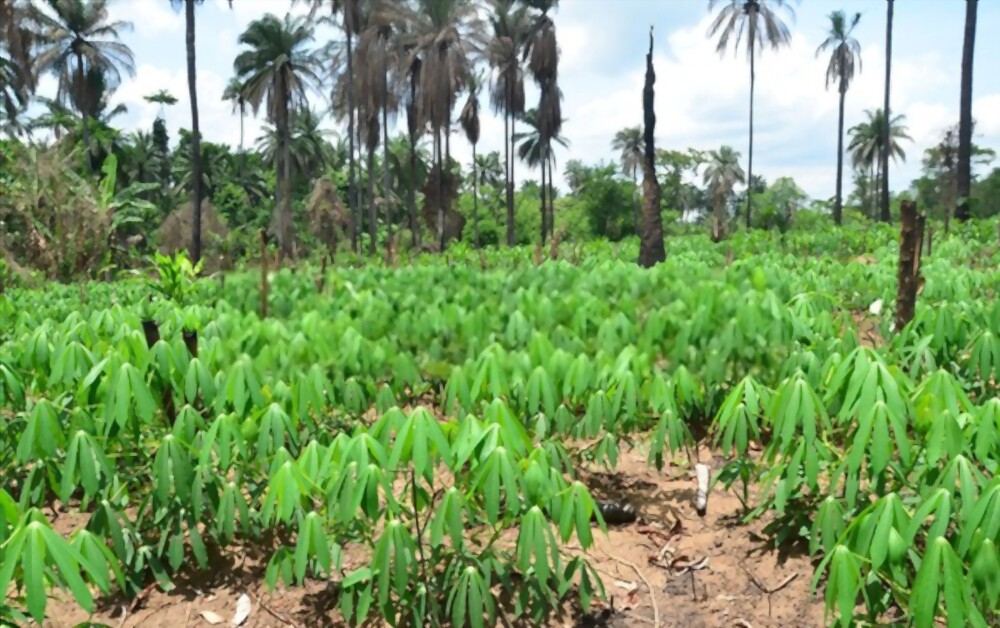 Get started with farming in Nigeria