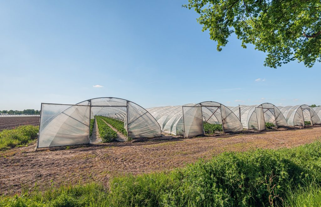 Careers in agriculture - a farm