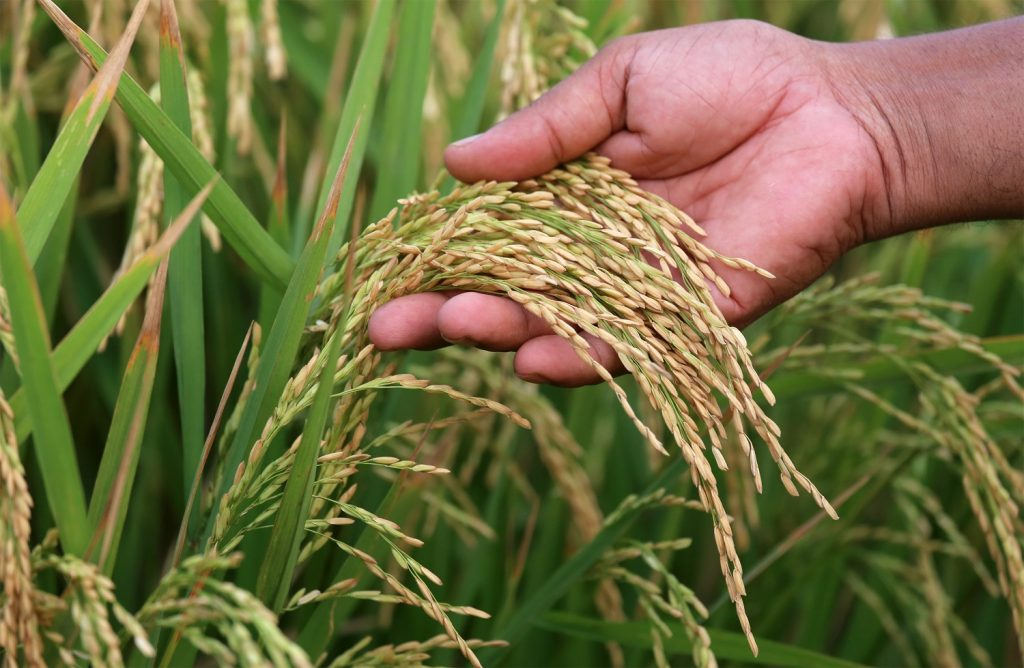 Careers in agriculture - Perennial Scientist