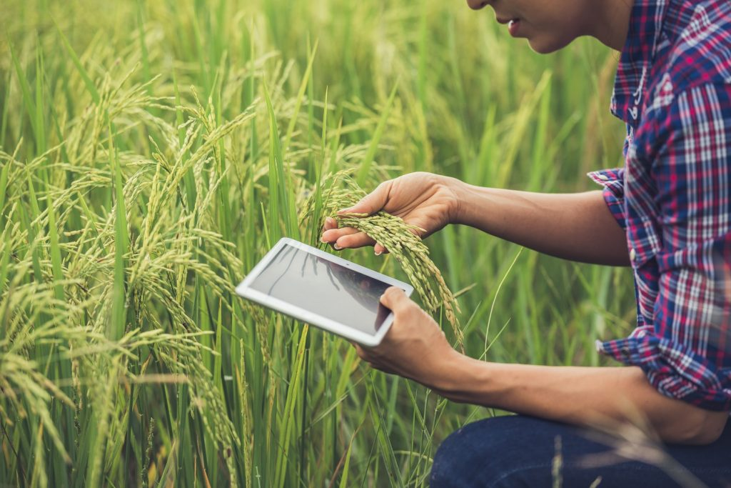 Jobs in agritech companies