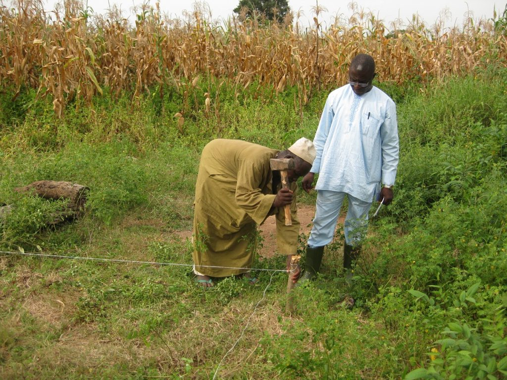 maize farming in Nigeria - finding suitable land and soil.
