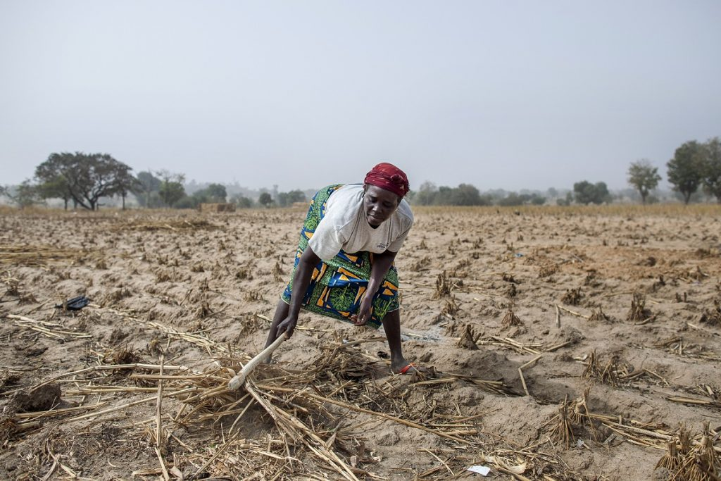 Maize farming in Niger- clearing and preparation
