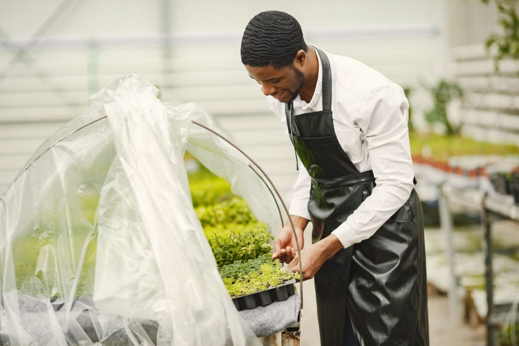 Career in agriculture - indoor farming
